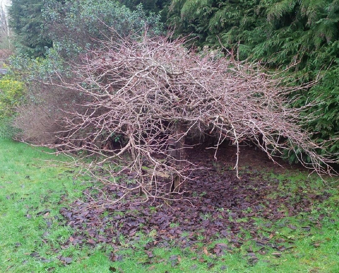 Mindful moment: cherry tree in December