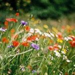 When change looks too difficult | Wild flowers in a meadow