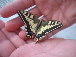 Struggle to break free | A butterfly rests on open hands